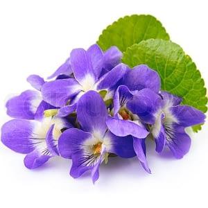 Huile Essentielle Violette