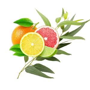 citrus-eucalyptus_b3fac181-0c66-420a-af3