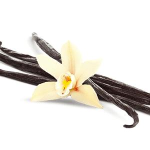 Huile essentielle Oléorésine de Vanille